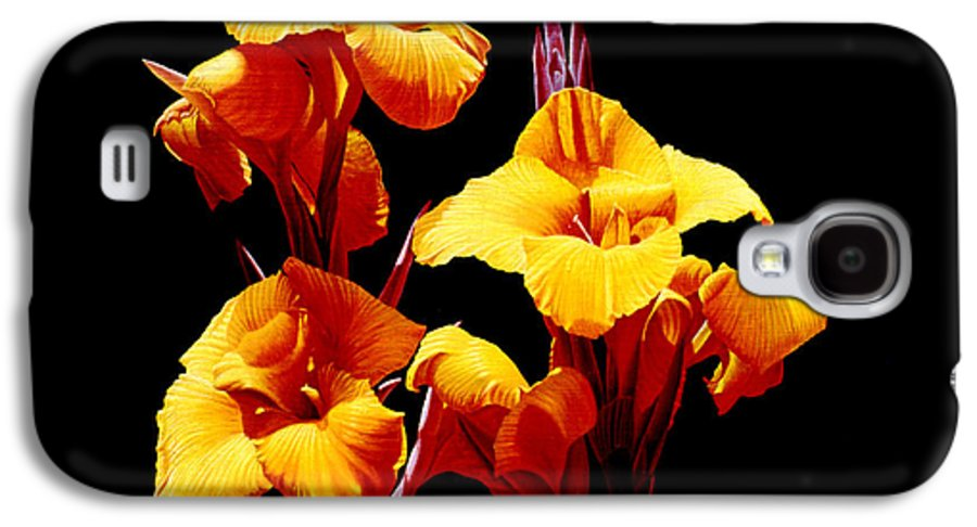 Yellow Cannas Galaxy S4 Case featuring the painting Orange Cannas by Gary Hernandez