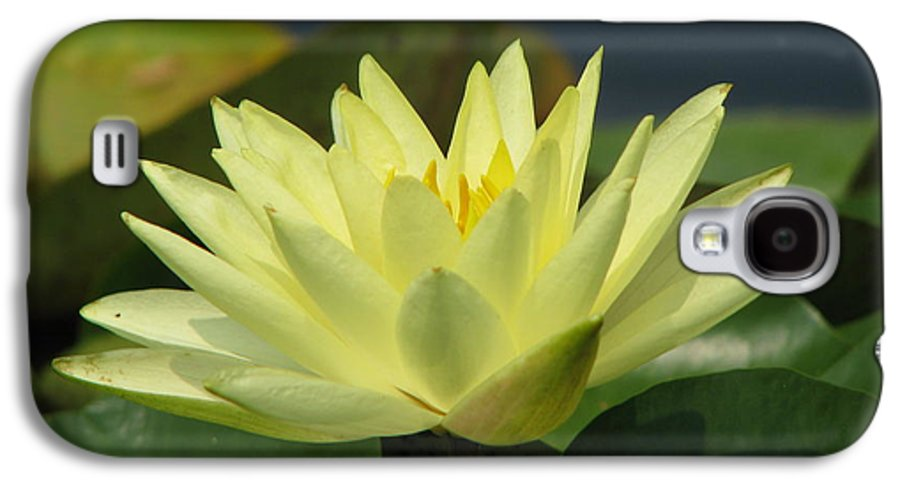 Lillies Galaxy S4 Case featuring the photograph Peace by Amanda Barcon