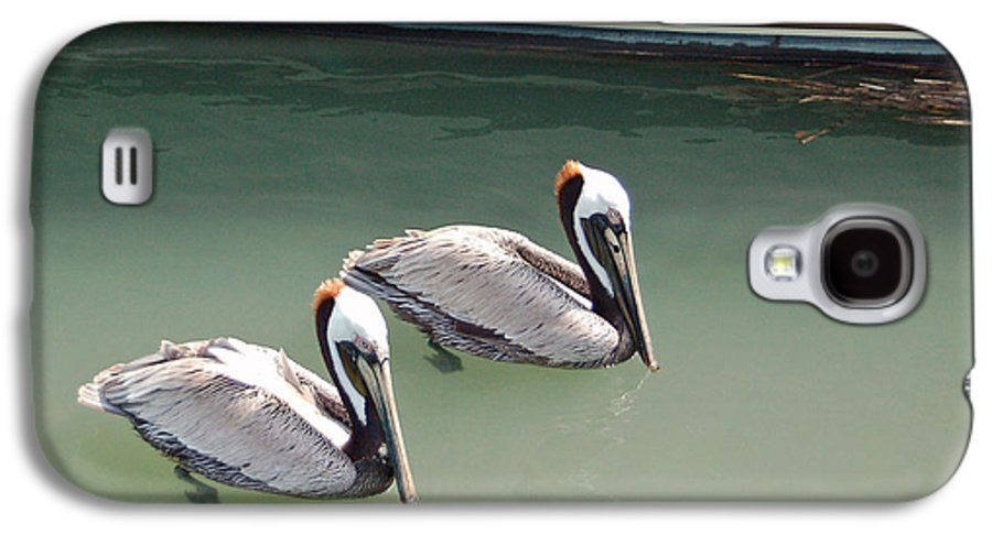 Brown Pelican Galaxy S4 Case featuring the photograph Pelicans Partners by Suzanne Gaff
