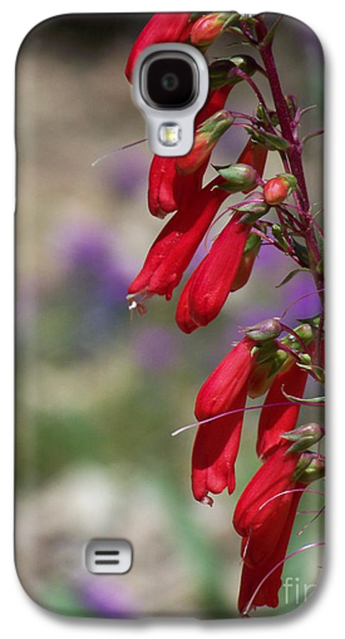 Flowers Galaxy S4 Case featuring the photograph Penstemon by Kathy McClure