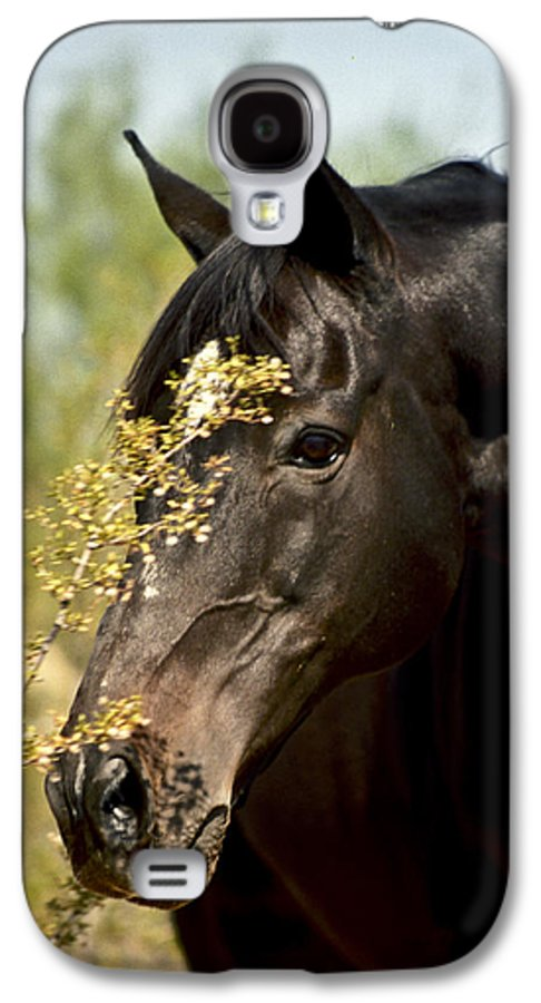 Horse Galaxy S4 Case featuring the photograph Portrait Of A Thoroughbred by Kathy McClure