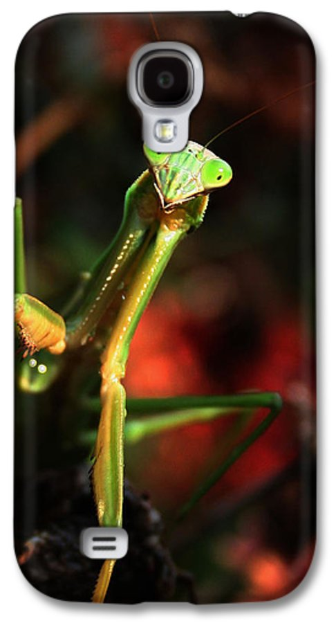 Praying Mantis Galaxy S4 Case featuring the photograph Praying Mantis Portrait by Linda Sannuti