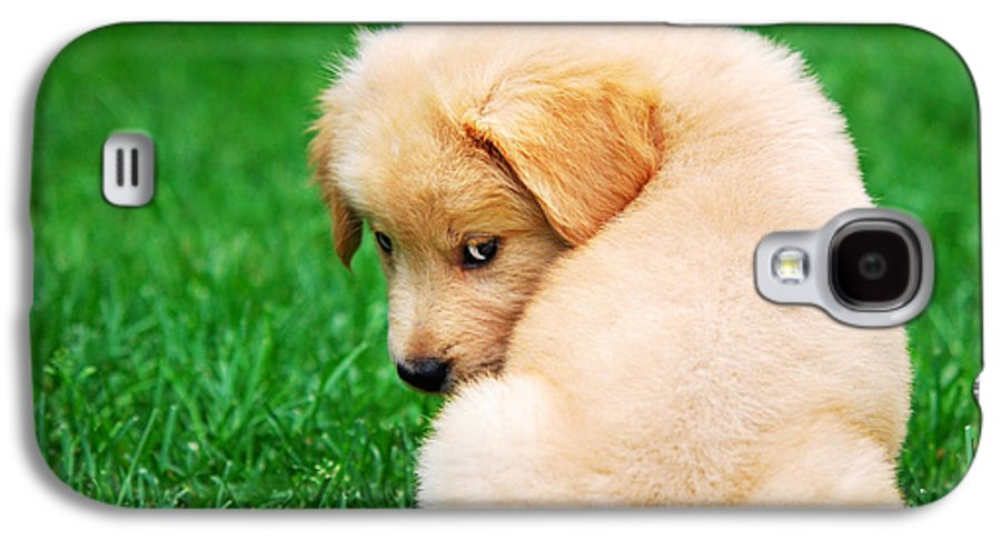 Golden Retriever Galaxy S4 Case featuring the photograph Puppy Love by Christina Rollo