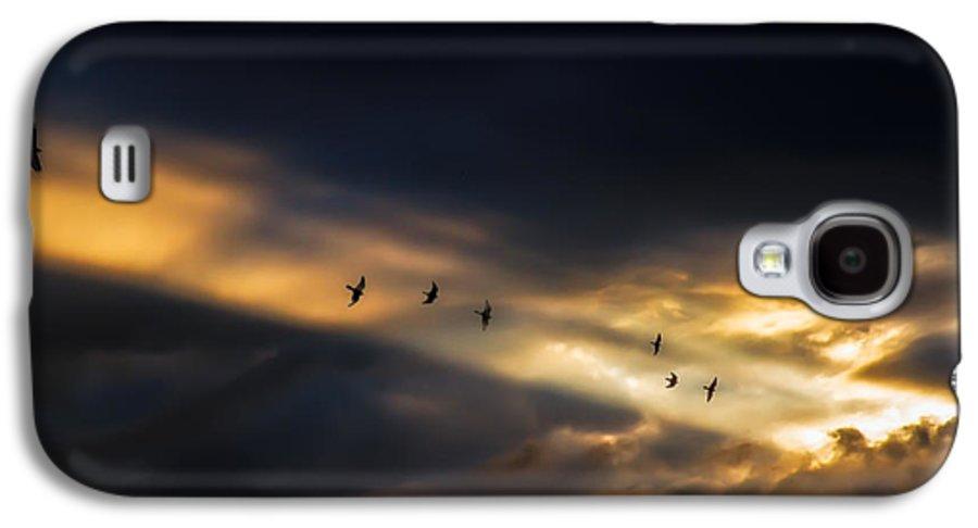 Birds Galaxy S4 Case featuring the photograph Seven Bird Vision by Bob Orsillo