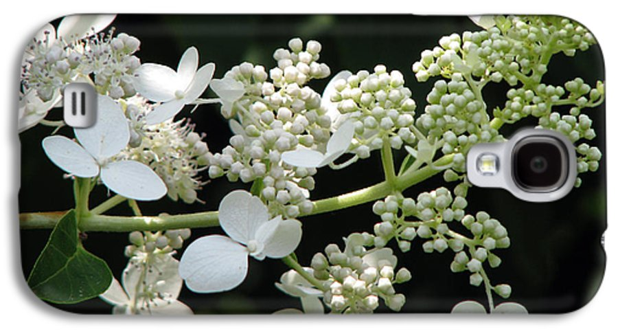 Hydrangea Galaxy S4 Case featuring the photograph Simply by Amanda Barcon