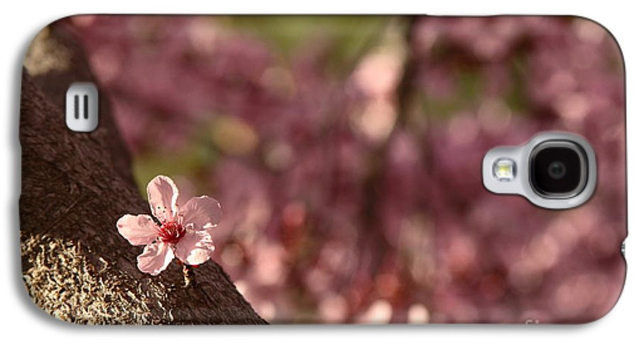 Nature Galaxy S4 Case featuring the photograph Solo In The Blossom Chorus by Jennifer Apffel