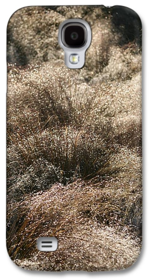 Grasses Galaxy S4 Case featuring the photograph Sparkling Grasses by Nadine Rippelmeyer