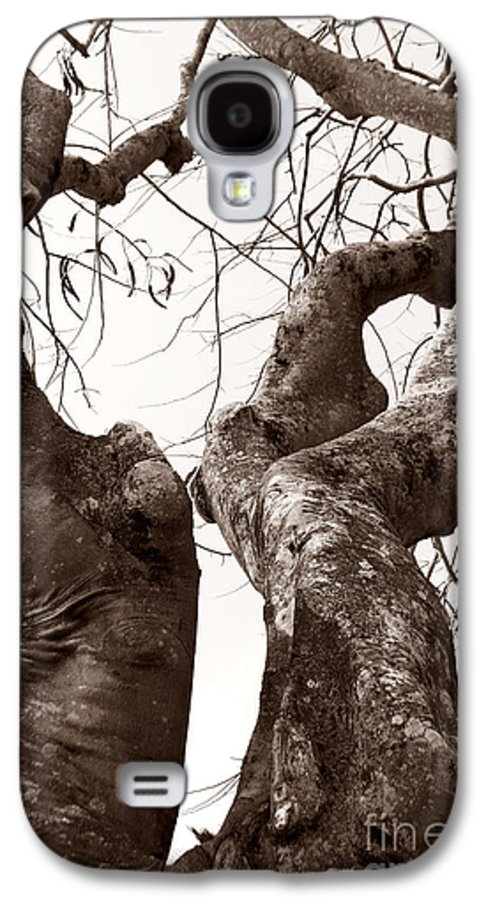 Nature Galaxy S4 Case featuring the photograph Story Tree by Jennifer Apffel