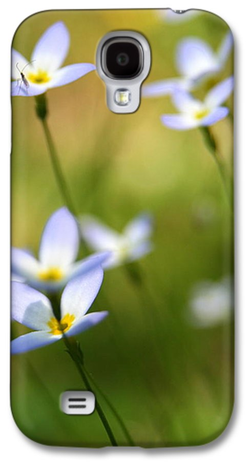 Quaker Lady Galaxy S4 Case featuring the photograph Sun Searching by Neal Eslinger