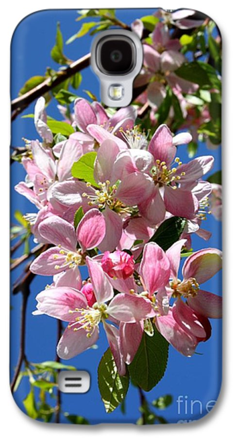 Blossoms Galaxy S4 Case featuring the photograph Sunlight On Spring Blossoms by Carol Groenen