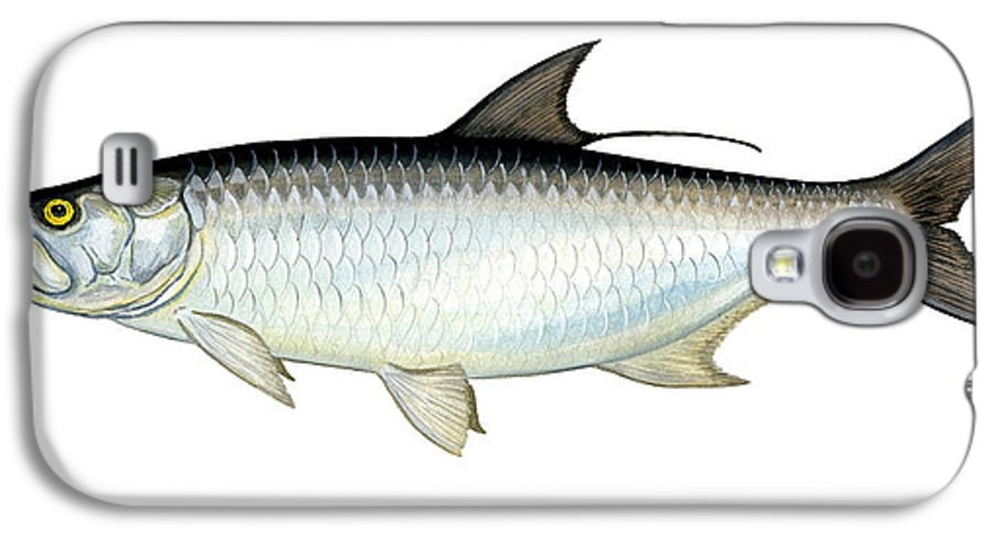 Charles Galaxy S4 Case featuring the painting Tarpon by Charles Harden