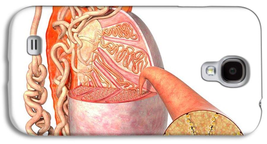 Testis Anatomy Galaxy S4 Case for Sale by Claus Lunau