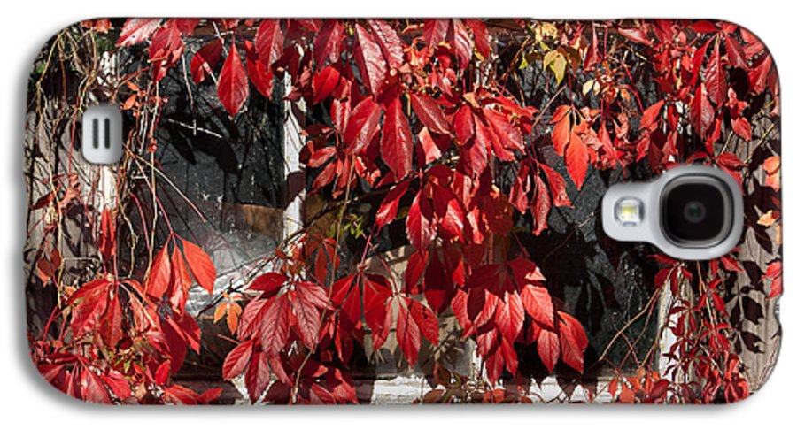 Virginia Creeper And Old Shed Galaxy S4 Case featuring the photograph The Old Shed by John Edwards
