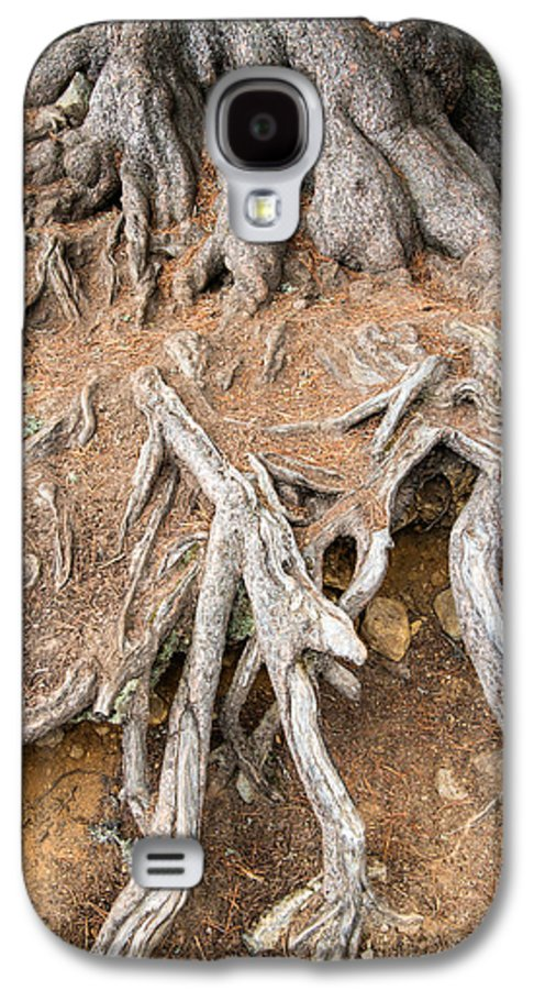 Tree Root Galaxy S4 Case featuring the photograph Tree Root by Matthias Hauser
