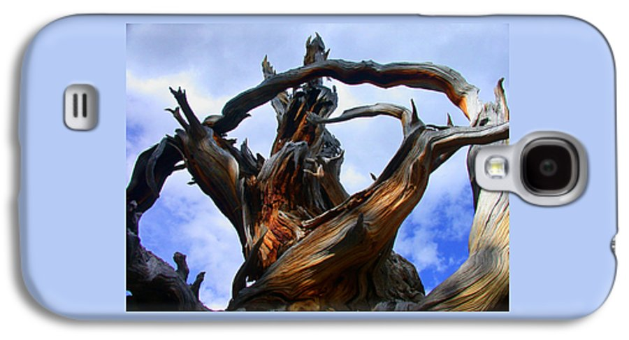Tree Roots Galaxy S4 Case featuring the photograph Uprooted Beauty by Shane Bechler
