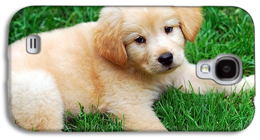 Golden Retriever Puppy Galaxy S4 Case featuring the photograph Warm Fuzzy Puppy by Christina Rollo