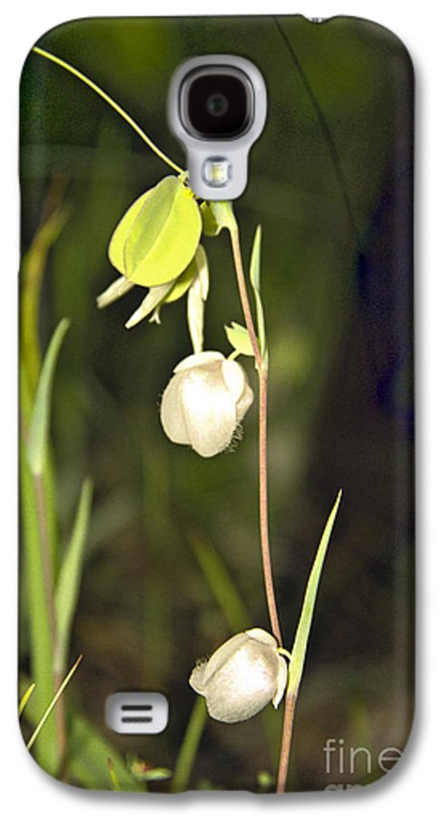 Wildflowers; Globes; Nature; Green; White Galaxy S4 Case featuring the photograph Whispers by Kathy McClure