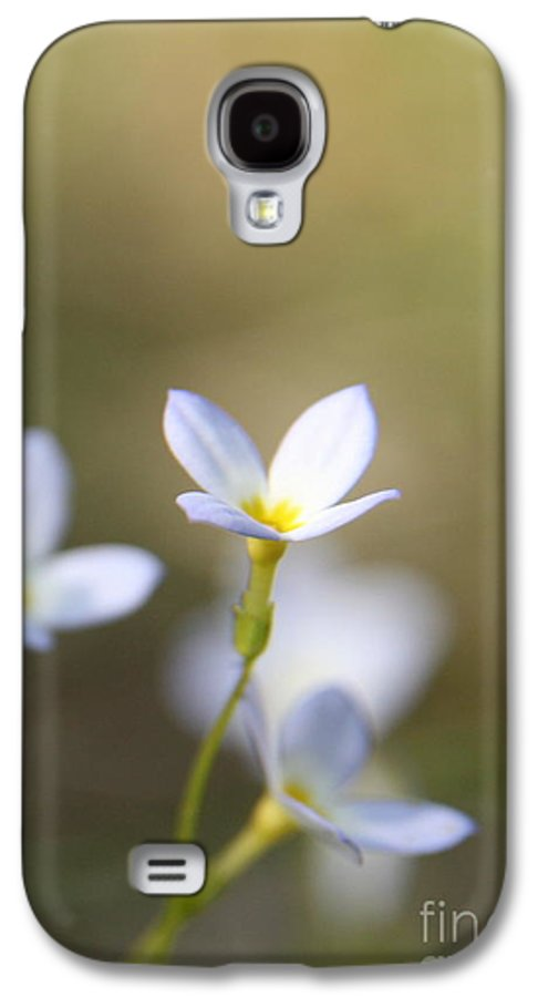 White Flower Galaxy S4 Case featuring the photograph White Serenity by Neal Eslinger
