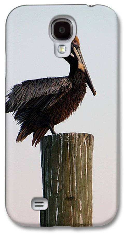 Brown Pelican Galaxy S4 Case featuring the photograph Will This Pose Do by Suzanne Gaff