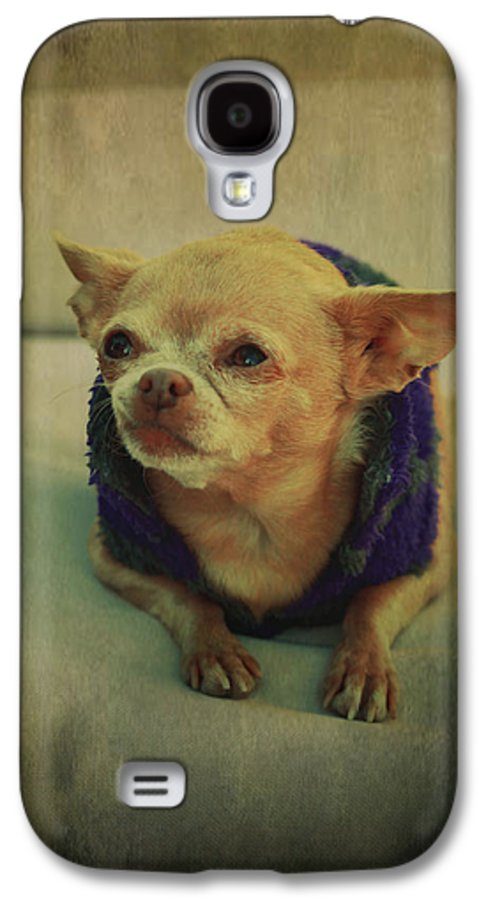 Chihuahuas Galaxy S4 Case featuring the photograph Zozo by Laurie Search