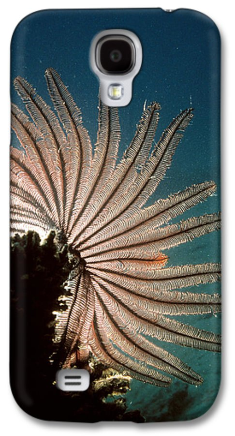 Crinoidea Galaxy S4 Case featuring the photograph Featherstar by Peter Scoones