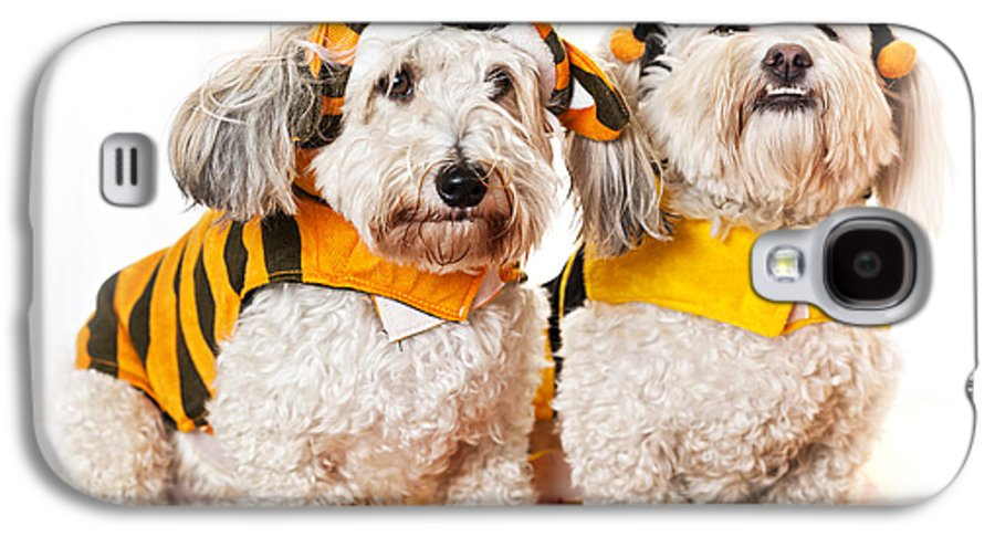 Dogs Galaxy S4 Case featuring the photograph Cute Dogs In Halloween Costumes by Elena Elisseeva