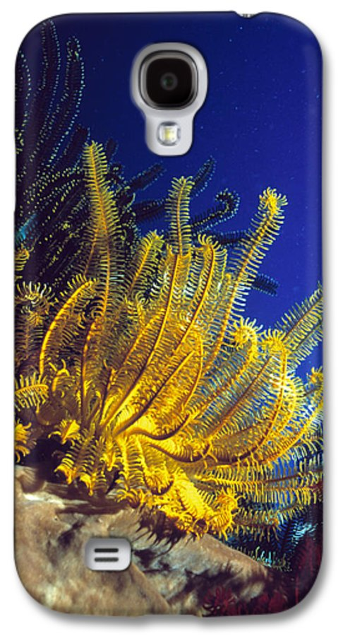 Crinoidea Galaxy S4 Case featuring the photograph Featherstars On Coral by Peter Scoones