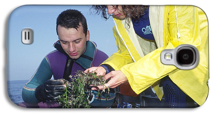 Alga Galaxy S4 Case featuring the photograph Invasive Seaweed Control by Alexis Rosenfeld