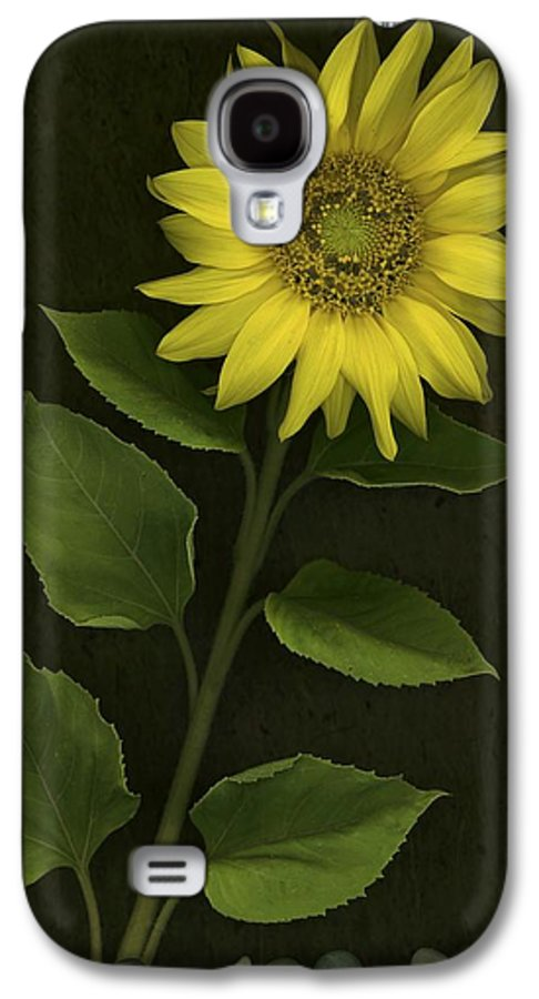 Blooming Galaxy S4 Case featuring the photograph Sunflower With Rocks by Deddeda