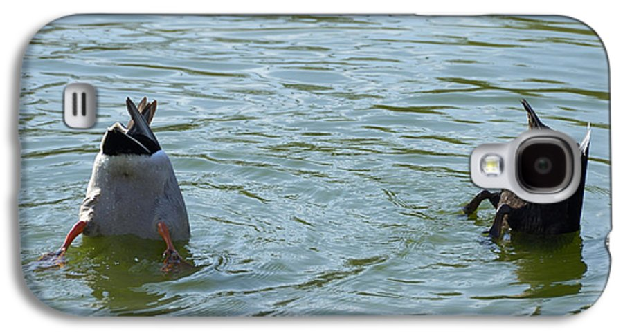 Ducks Galaxy S4 Case featuring the photograph Two Ducks Diving by Matthias Hauser