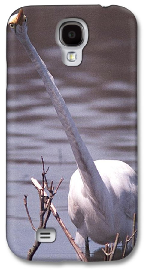 Egret Galaxy S4 Case featuring the photograph 070406-9 by Mike Davis