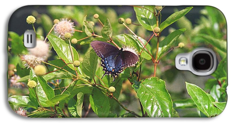 Butterfly Galaxy S4 Case featuring the photograph 080706-6 by Mike Davis