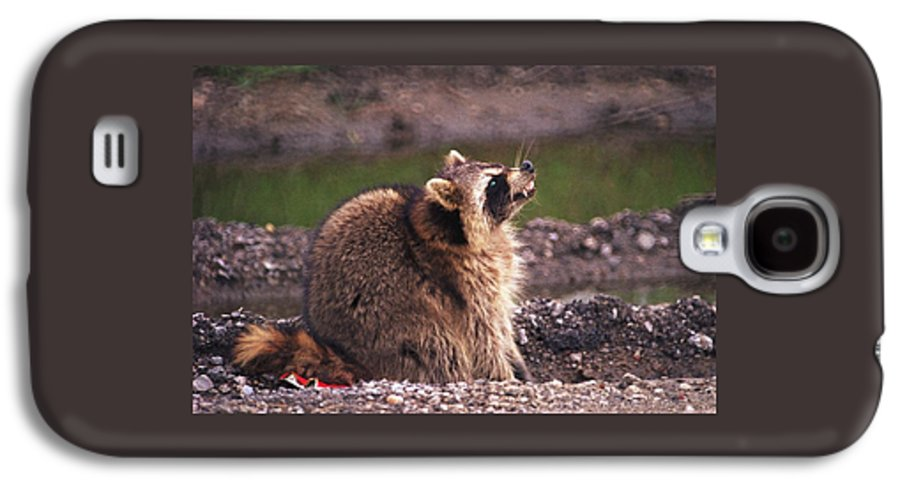 Raccoon Galaxy S4 Case featuring the photograph 070406-67 by Mike Davis