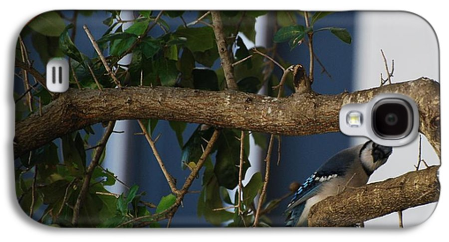 Birds Galaxy S4 Case featuring the photograph Blue Bird by Rob Hans
