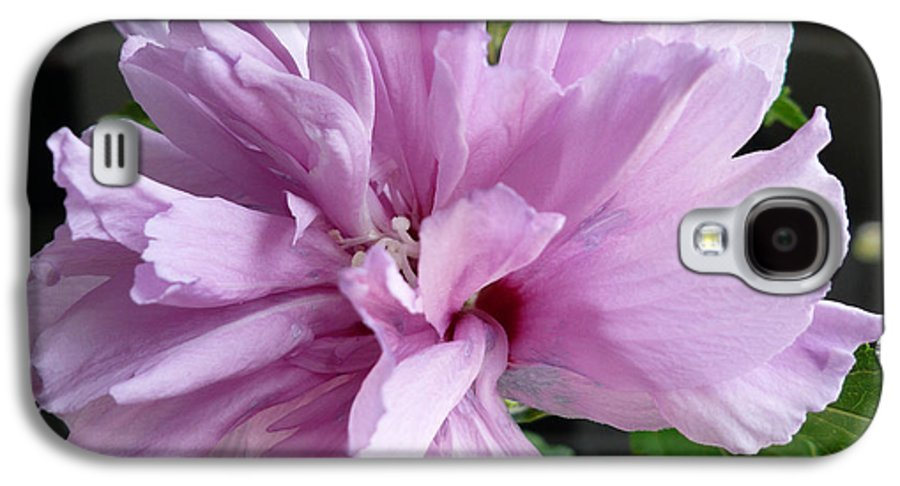 Phoyography.hibiscus Flower Floral Bloom Bush Pink Galaxy S4 Case featuring the photograph So Pink by Karin Dawn Kelshall- Best
