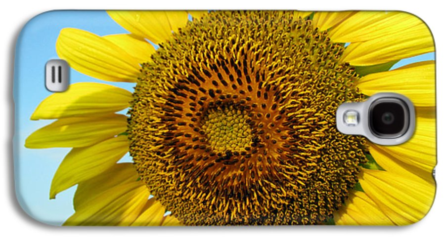 Sunflower Galaxy S4 Case featuring the photograph Sunflower Series by Amanda Barcon