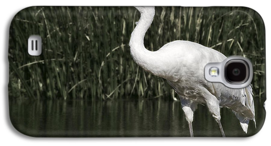 Whooping Galaxy S4 Case featuring the photograph Whooping Crane by Al Mueller