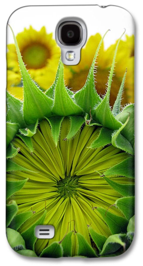 Sunflwoers Galaxy S4 Case featuring the photograph Sunflower Series by Amanda Barcon