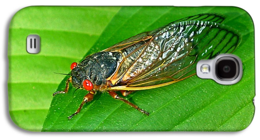 17 Galaxy S4 Case featuring the photograph 17 Year Periodical Cicada by Douglas Barnett