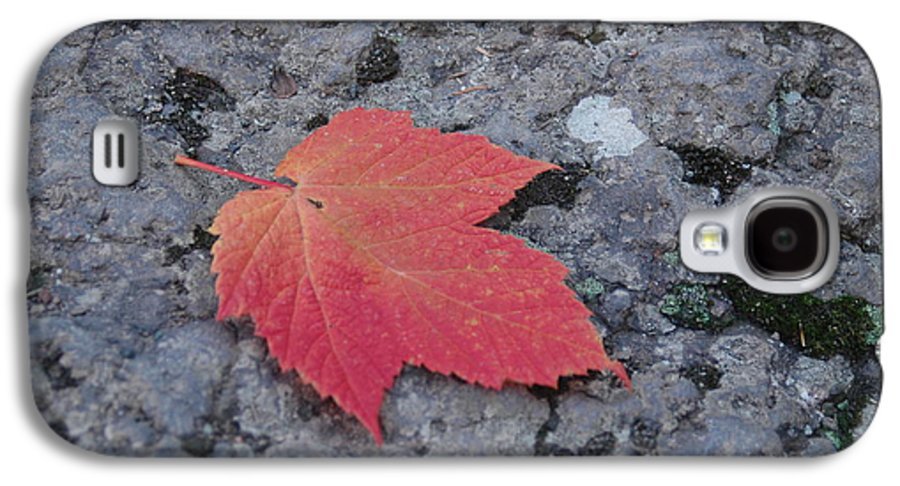 Leaf Galaxy S4 Case featuring the photograph Untitled by Kathy Schumann