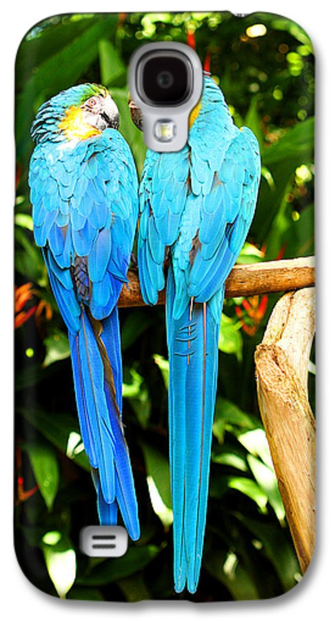 Bird Galaxy S4 Case featuring the photograph A Pair Of Parrots by Marilyn Hunt