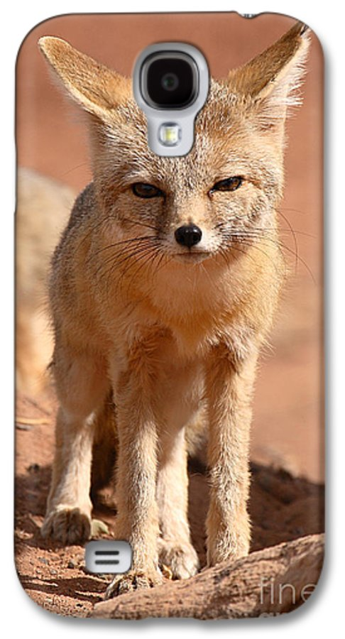 Fox Galaxy S4 Case featuring the photograph Adult Kit Fox Ears And All by Max Allen