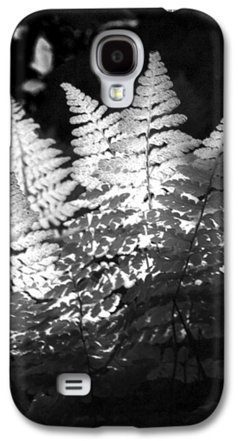 Fern Galaxy S4 Case featuring the photograph After Glow by Randy Oberg