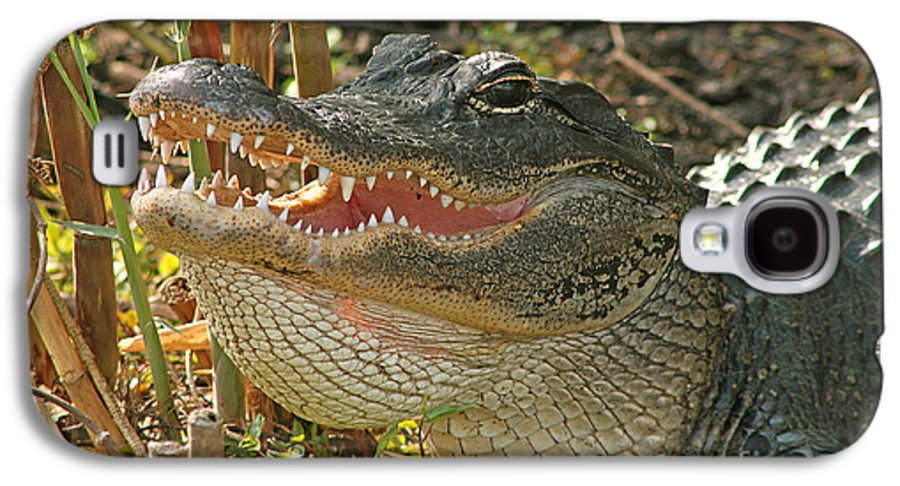 Alligator Galaxy S4 Case featuring the photograph Alligator Showing Its Teeth by Max Allen