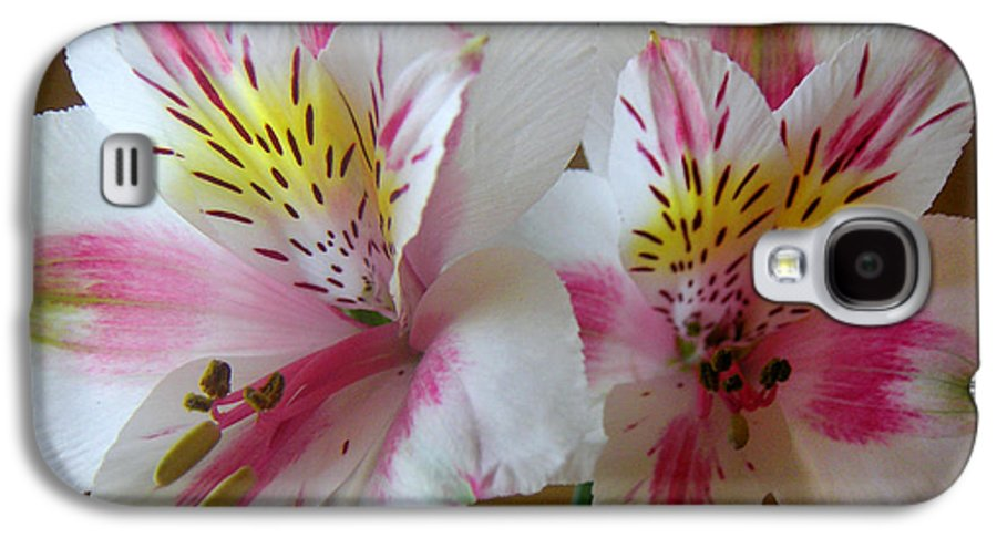 Nature Galaxy S4 Case featuring the photograph Alstroemerias - Heralding by Lucyna A M Green