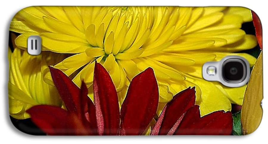 Chrysanthemum Photography Galaxy S4 Case featuring the photograph Autumn Colors by Patricia Griffin Brett