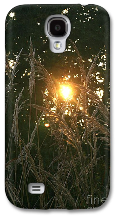 Light Galaxy S4 Case featuring the photograph Autumn Grasses In The Morning by Nadine Rippelmeyer