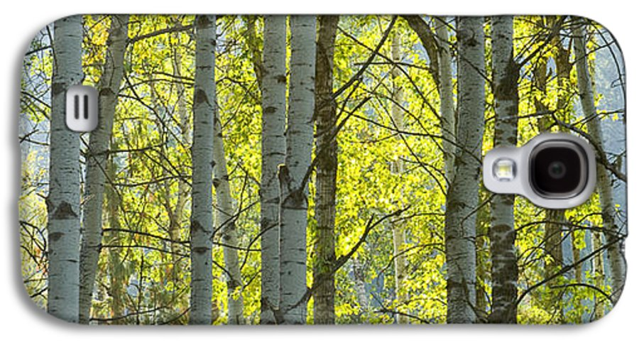 Trees Galaxy S4 Case featuring the photograph Autumn Through The Trees by Idaho Scenic Images Linda Lantzy