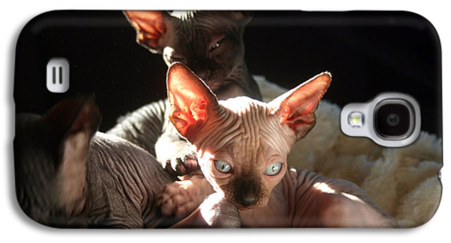 Photo Galaxy S4 Case featuring the photograph Baby Sphynx Cats by Ruben Flanagan