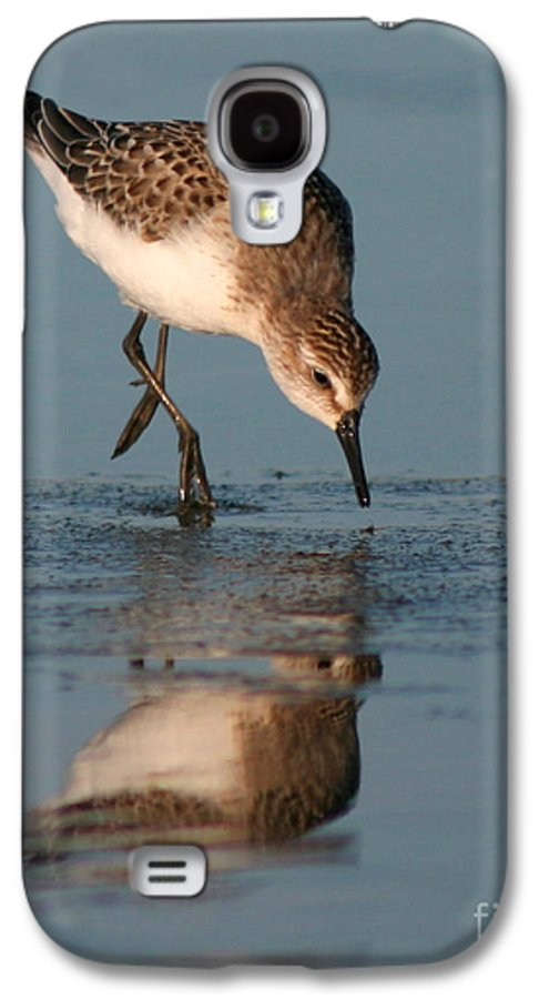Sanderling Galaxy S4 Case featuring the photograph Ballet Feeding Of A Sanderling by Max Allen